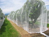 Orchard netting birdnetting cherry nets bird protection