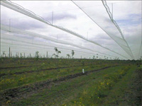 Netting structure birdnetting nets bird protection