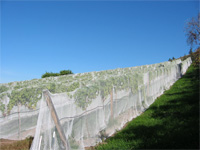 drapeover net birdnetting vineyard bird protection